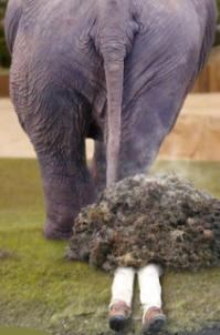 Elephant_dump