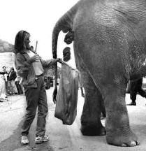 Elephant_shit