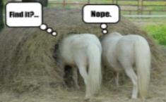 Needle-in-the-haystack