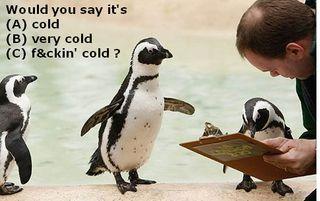 Penguins taking a marketing survey
